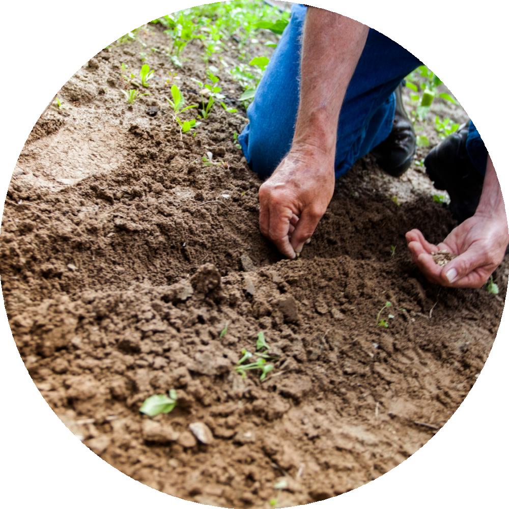 Man planting seeds circle PNG