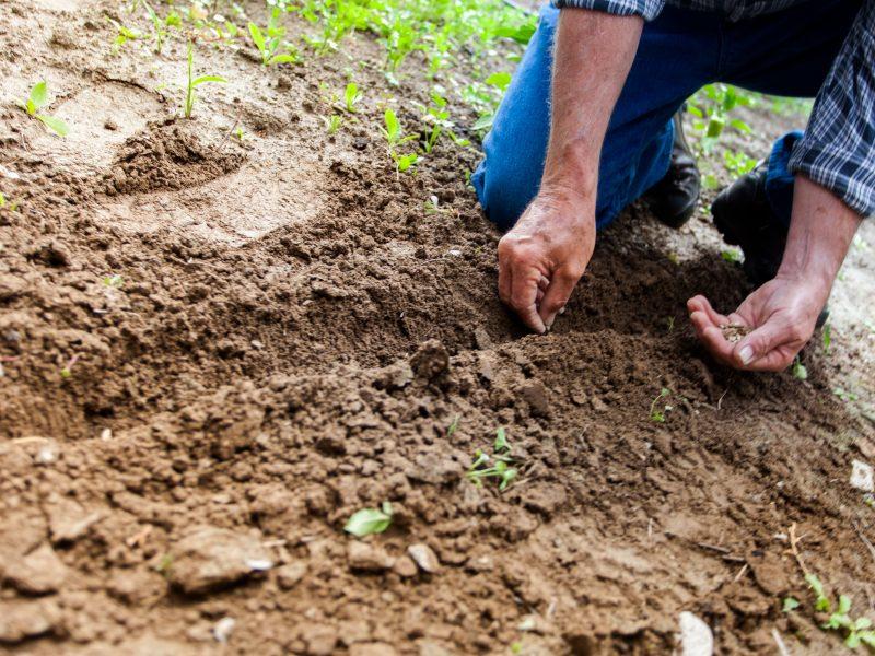 Man planting plant 169523