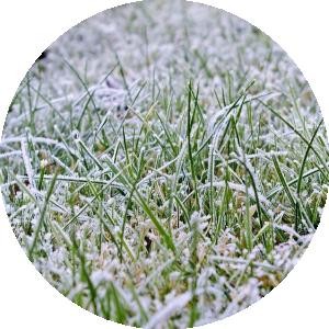 december lawn
